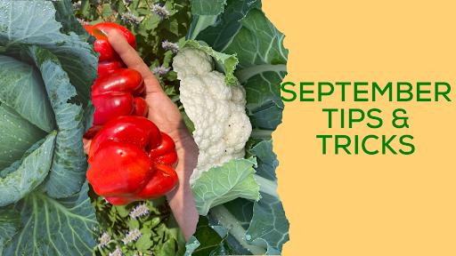 September Tips & Tricks