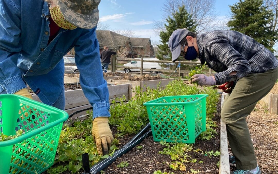 Cultivating Engagement in Your Garden